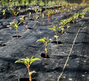 Bạt địa nông nghiệp