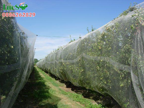 Sử dụng lưới chắn côn trùng làm nhà lưới trồng rau sạch